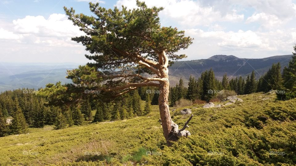 The beautiful nature