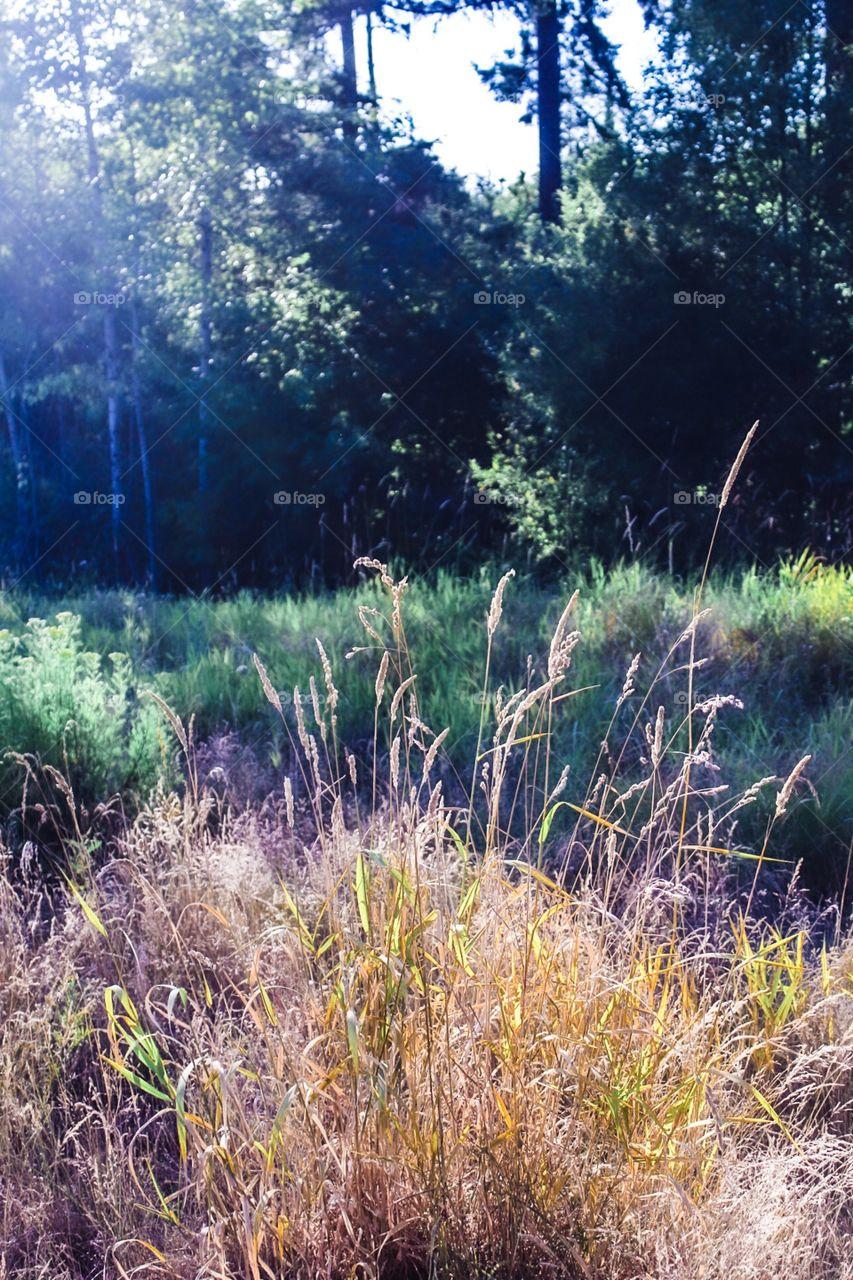 Hidden beauty all around us. Nature path