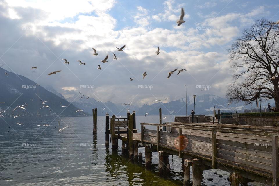 Seagulls flying near wooden pier