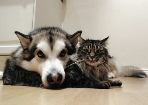 """Dog """"I love you to pieces kitty""""  Cat: """"I hope those humans get that this time and never separate us again."""""""