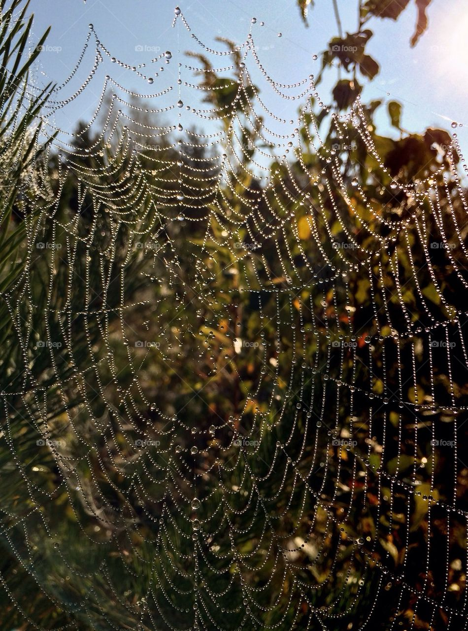 Close-up of a spider web