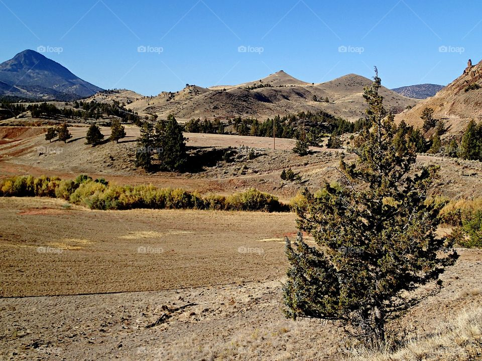 Juniper trees on the edge of hayfields with hills in the background on a sunny fall day in Eastern Oregon.
