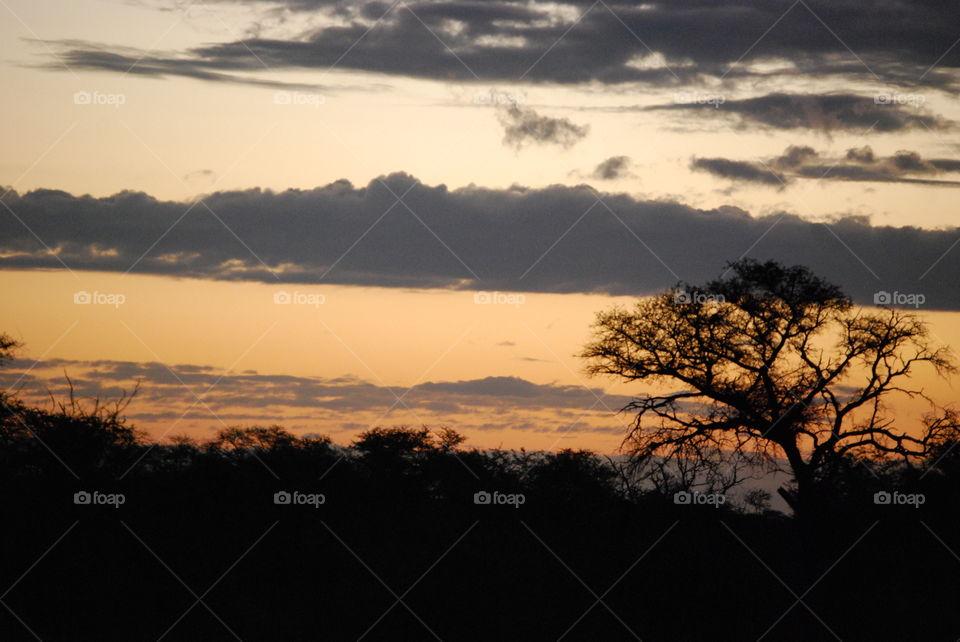 Sunset, Landscape, Silhouette, Tree, Dawn