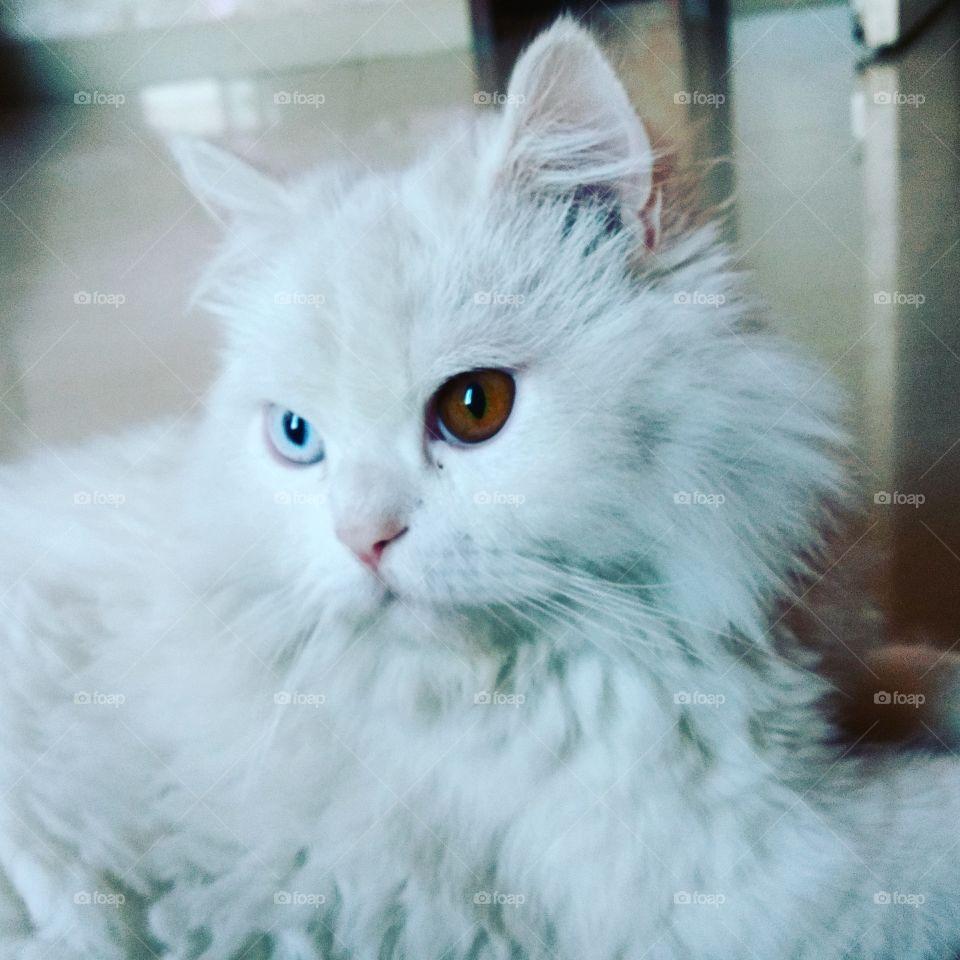 Beautiful cat eye's