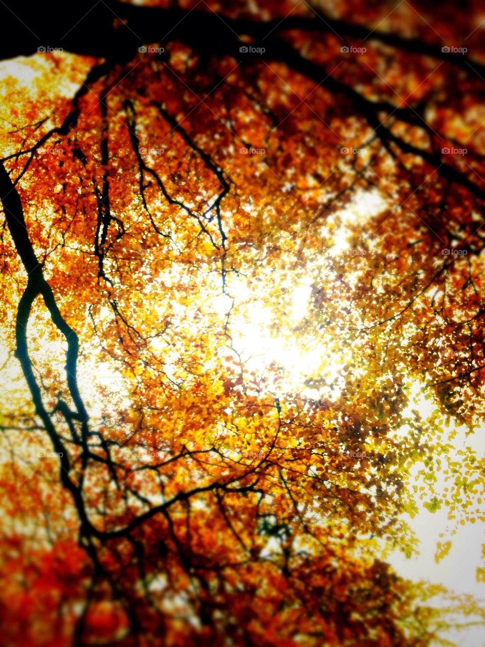 sky red orange trees by ahilton2007