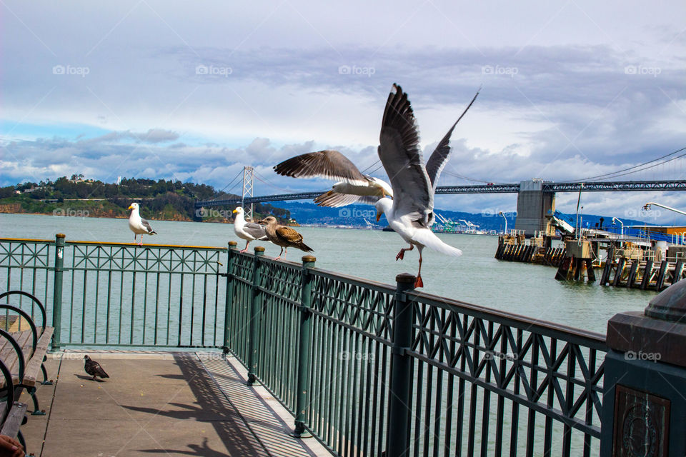 Seagulls in San Francisco