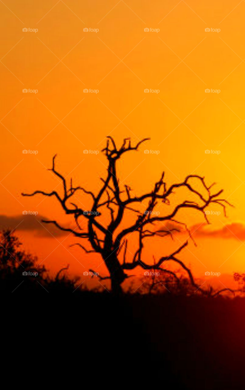 OrangeTorch! The sun hovered briefly on the horizon, then dipped below, cascading a bombardment of colors! An explosion of radiant orange covered the sky and a weathered silhouette of a tree appeared! Life is good!!