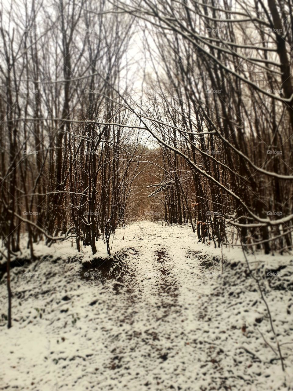 walk through the woods by taking the first snow