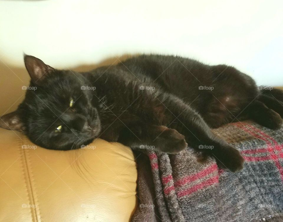 Black cat laying up on back of couch, eyes open, blanket under her. She's very relaxed.