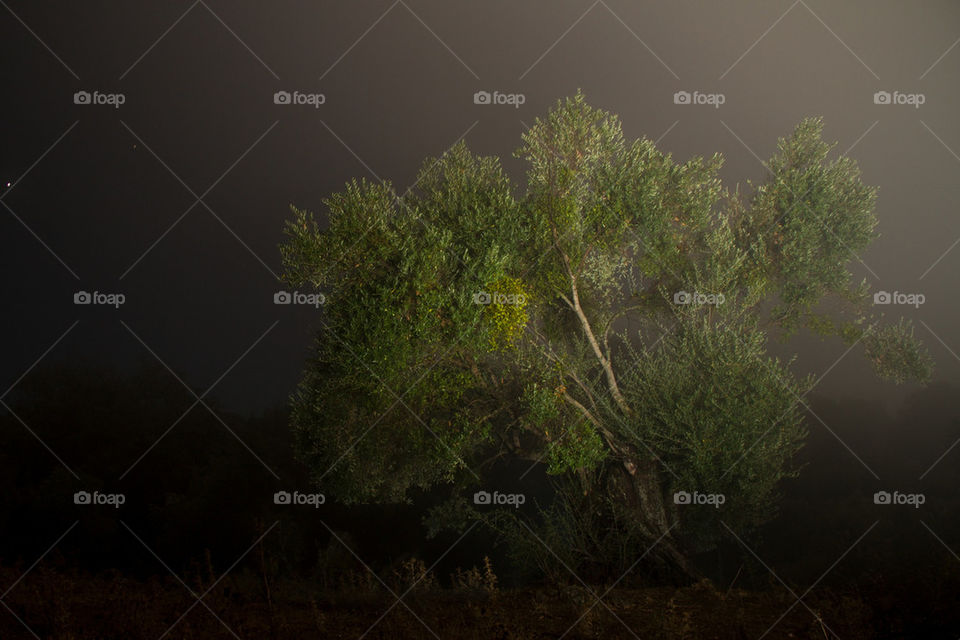 Olive tree at nighttime