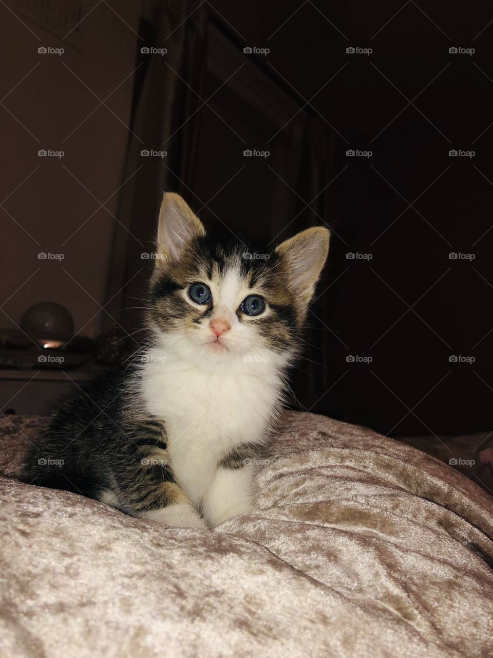 Cutie kitty 🐱