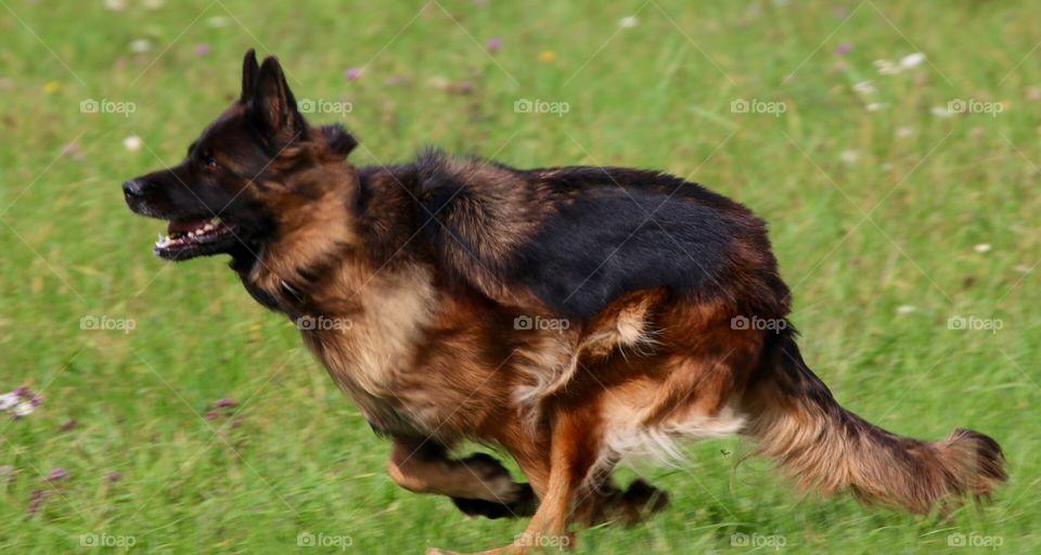 Dog, Canine, Mammal, Cute, Pet
