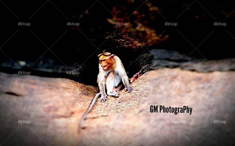 Even this monkey is frustrated and showing it's tooth that not to irritate it...,It's really awesome to look towards the ViewFinder....I felt it well that's y I shooted t well by my ViewFinder of#700D.