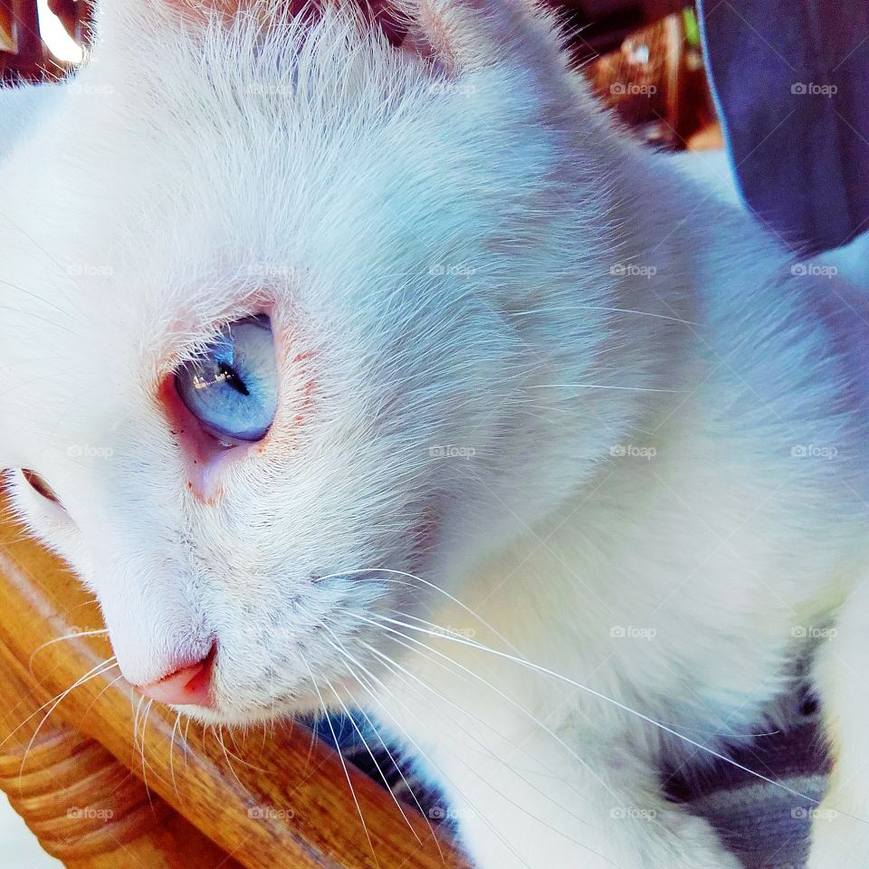 White Greek beauty with gorgeous blue eyes!   Korfu, Greece