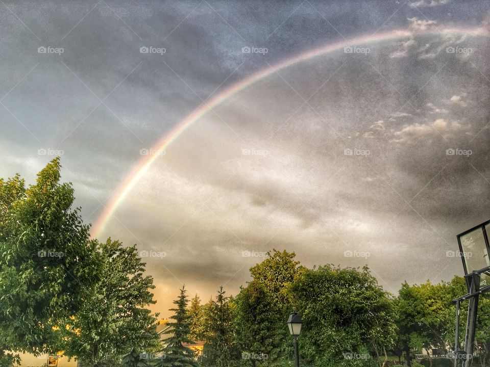 Rainbow over the trees