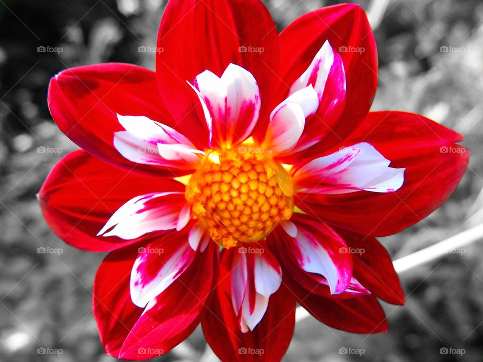 Crazy Plant People!, Monochrome And Color Image, Flower Photography, Closeup