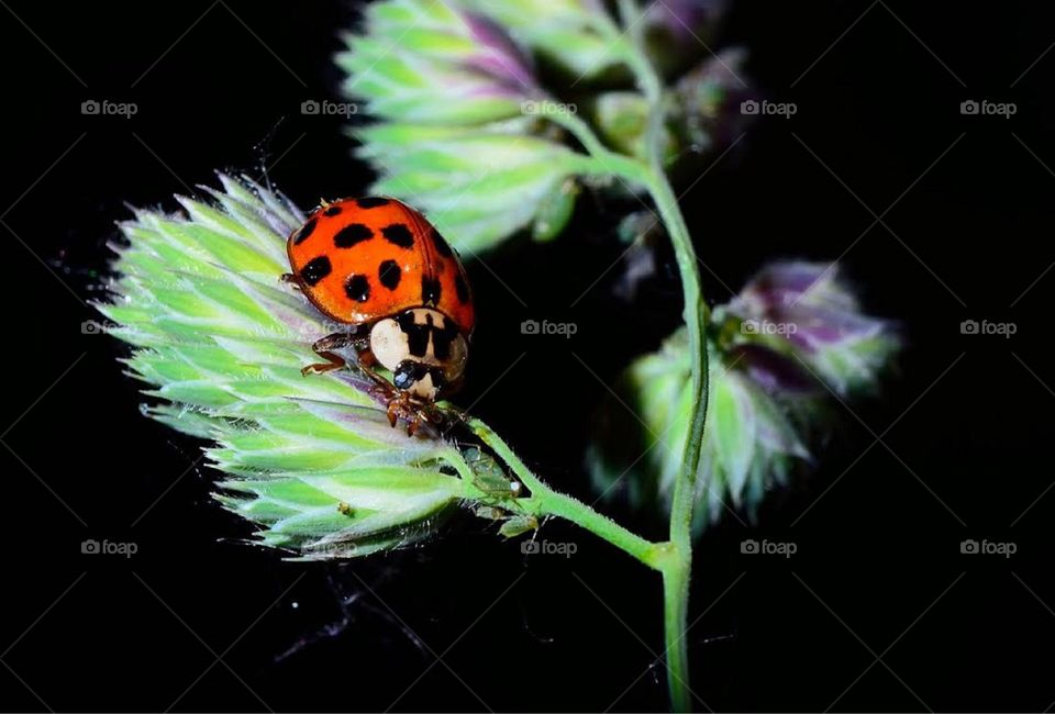 Beautiful micro shoot green flower and ladybird