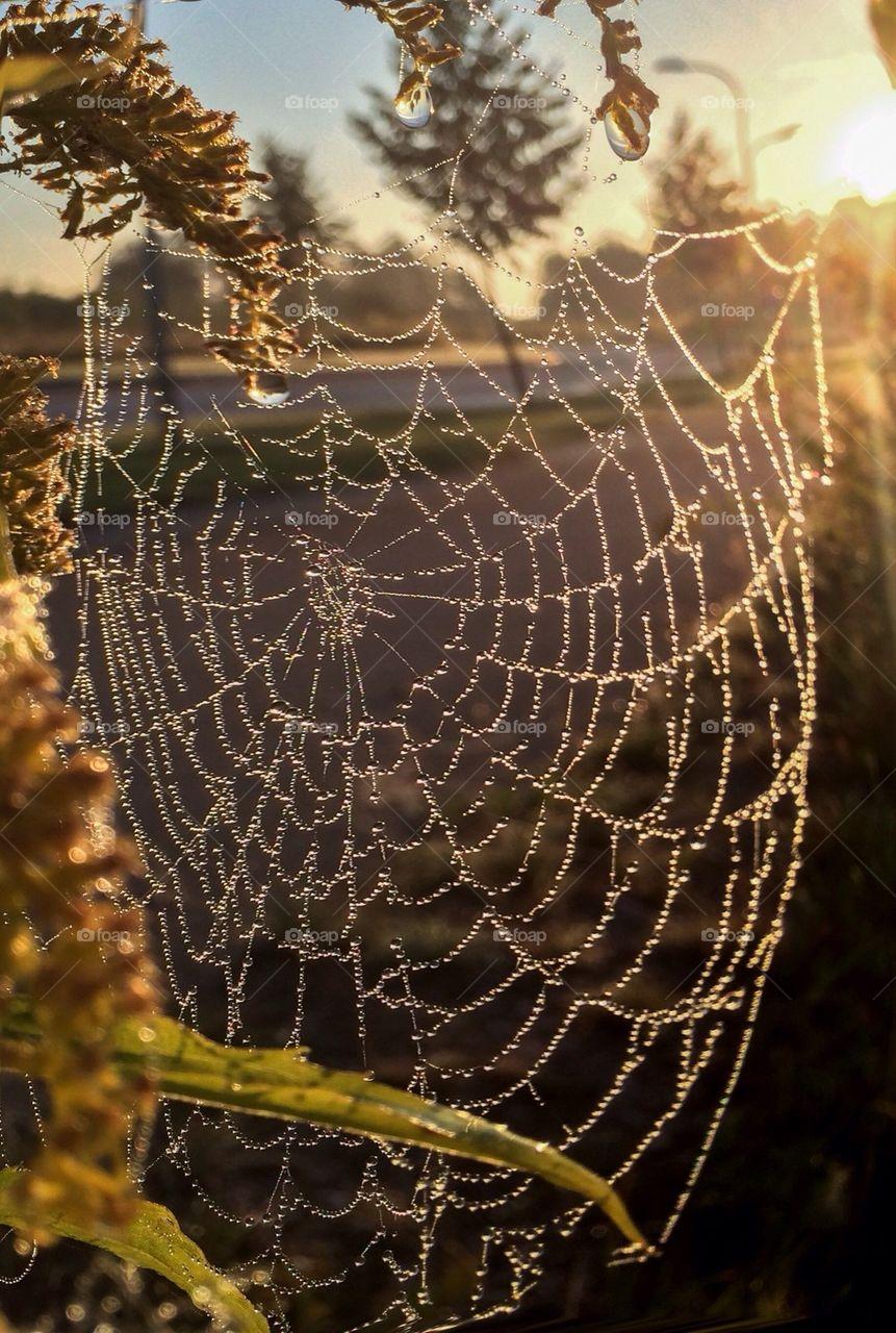 Close-up of spiderweb