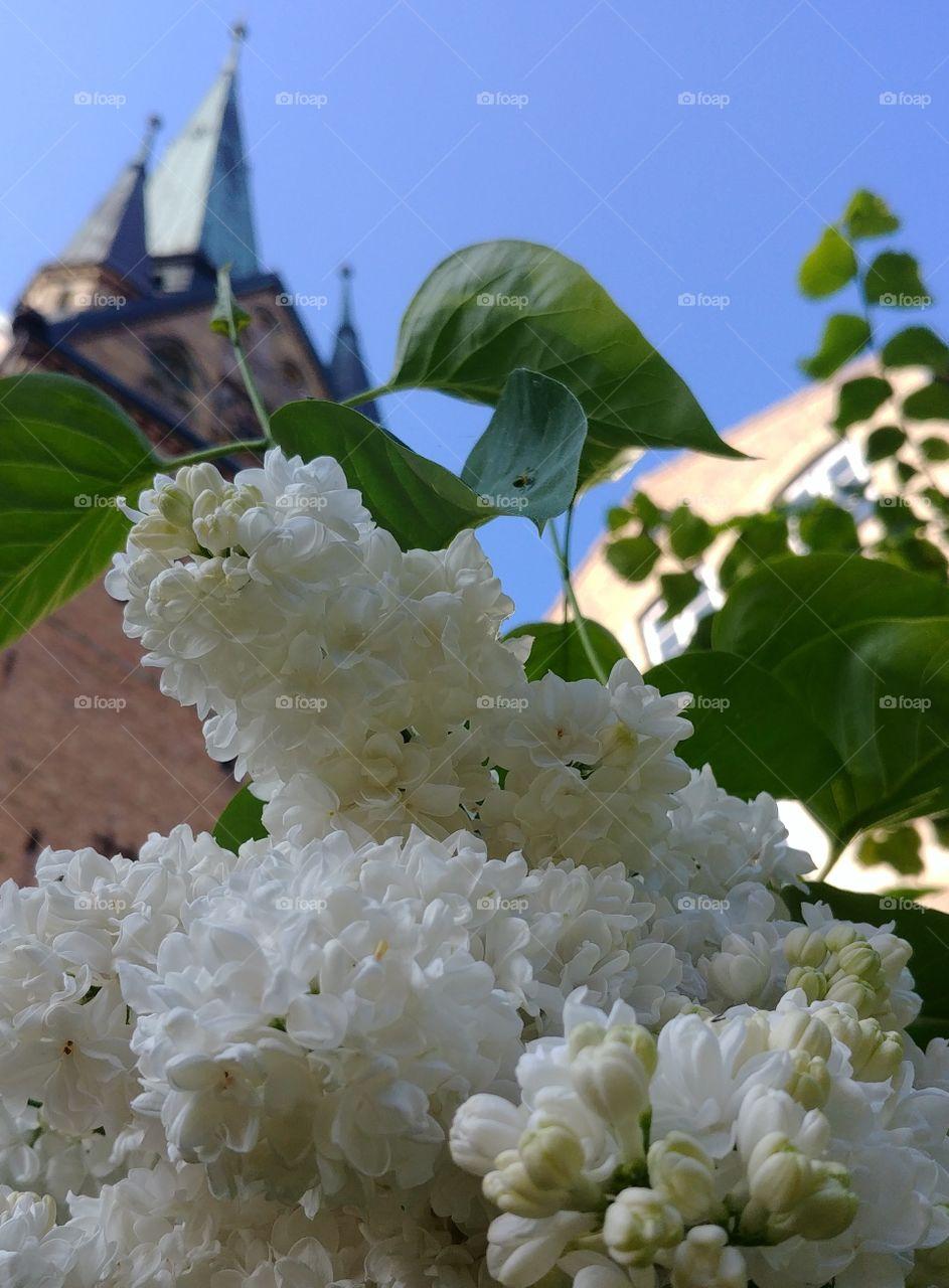 flieder weiss Frühling spring Kirche hell