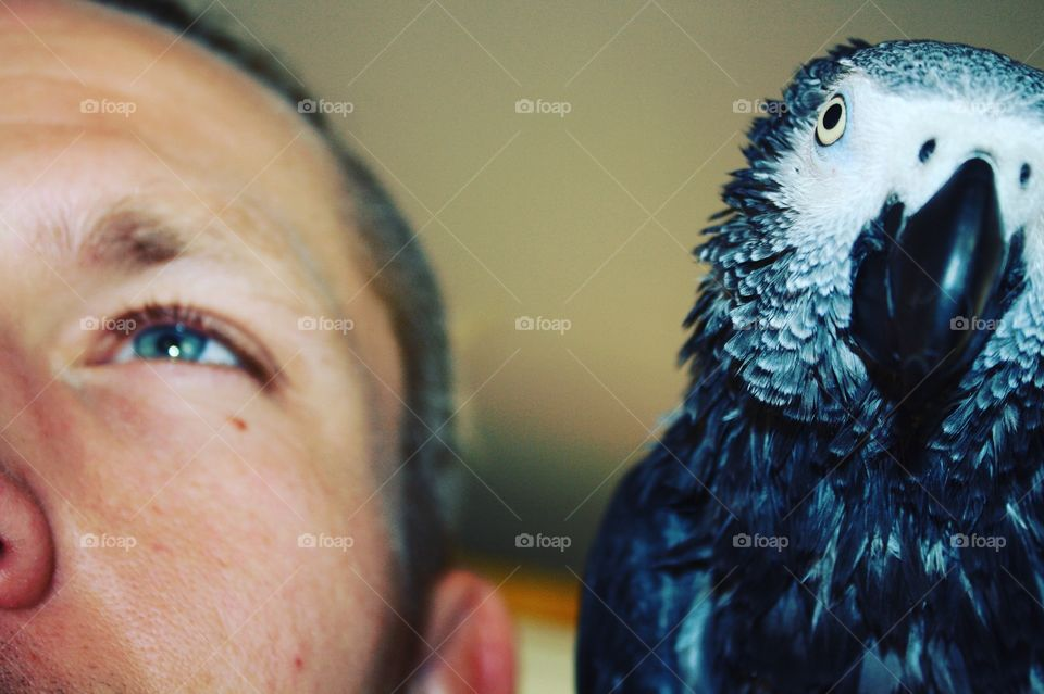 Extreme close-up of man with blue parrot