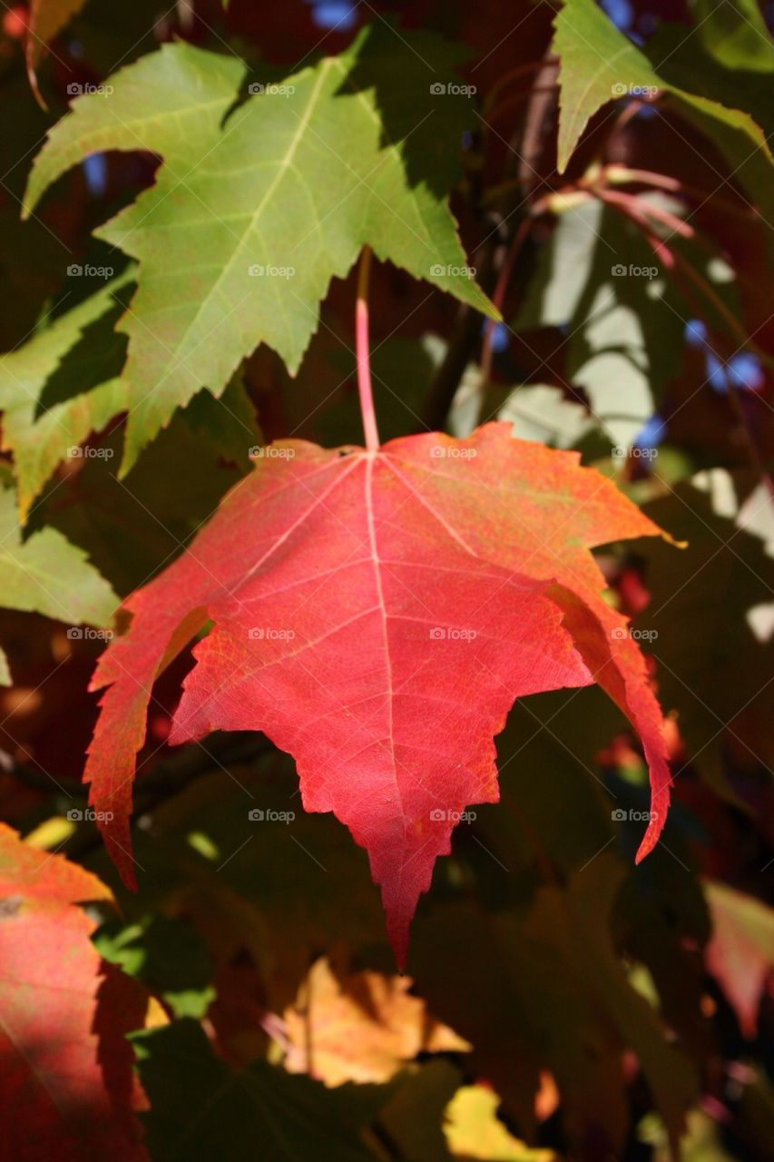 Close-up of autumn leaf   season, nobody, nature, outdoors