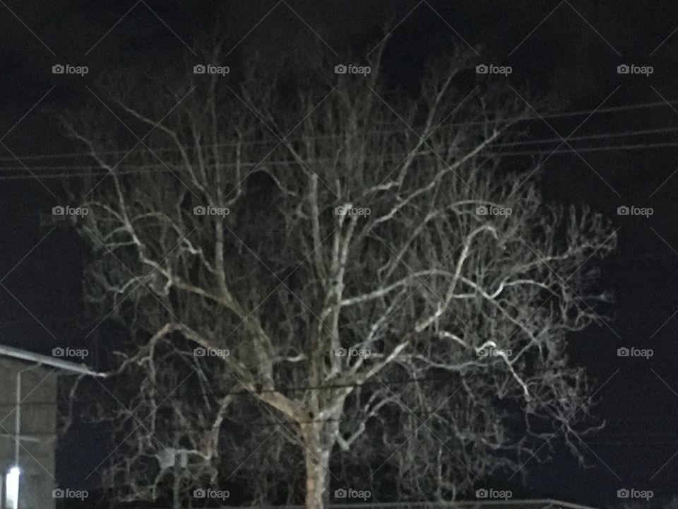 Scary night tree