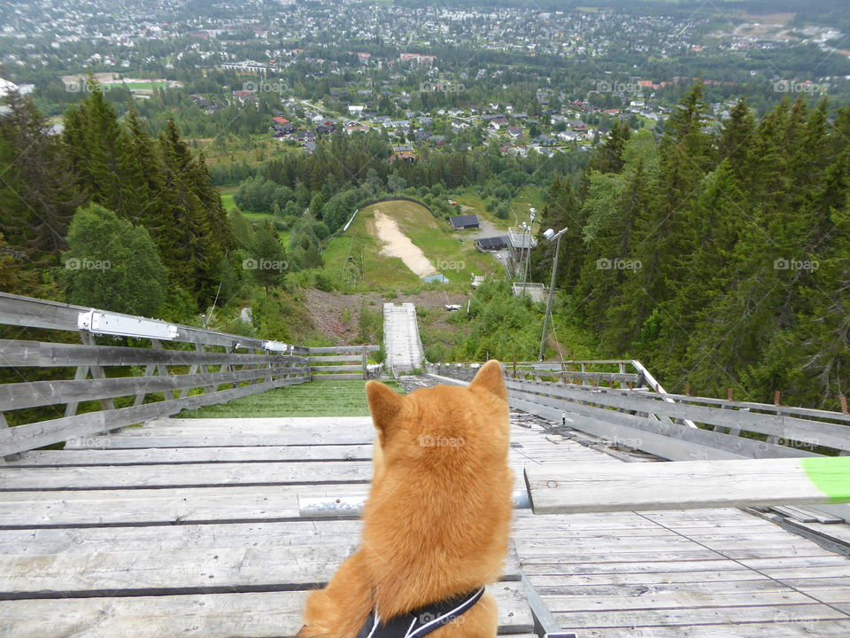 On top of the hill