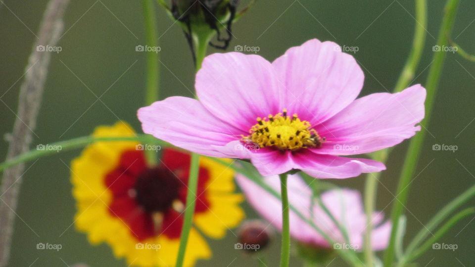 Nature, No Person, Flower, Summer, Flora